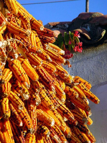 FormatFactoryMillo (maíz) secandose
